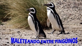 ENTRE PINGUINOS